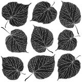 Linden leaves black and white. Isolated on white background Royalty Free Stock Photography