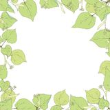 Linden leaves, branches and flowers. Vector illustration Stock Images