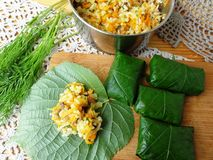 Linden leaves stuffed cheese carrot dill,. Cooking vegetarian healthy food with wild plants stock photography
