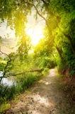 Linden near river. Linden near calm river in sunny morning Stock Image