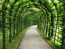 Linden pergola tunnel. A linden pergola spending shade in summer Royalty Free Stock Photos