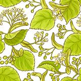 Linden vector pattern. Linden plant vector pattern on white background Royalty Free Stock Photos
