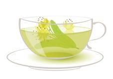 Linden tea. Vector illustration of linden tea Stock Photos