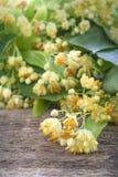 Linden tea flowers Royalty Free Stock Image