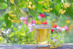 Linden tea in a glass cup Stock Photo