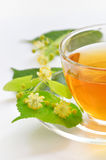 Linden tea Stock Images
