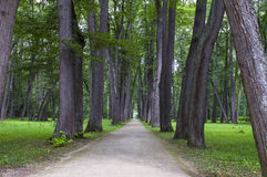 Linden-tree alley Stock Photo