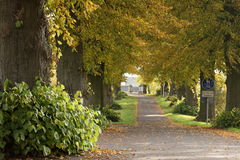 Linden Tree Alley near Herleshausen in Germany Royalty Free Stock Photo