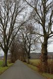 Linden tree avenue in autumn. A Linden tree avenue in autumn royalty free stock photography