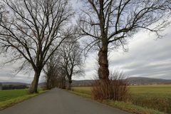 Linden tree avenue in autumn. A Linden tree avenue in autumn stock photography