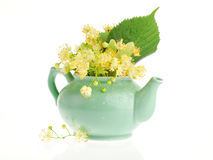 Linden tree flowers Royalty Free Stock Image