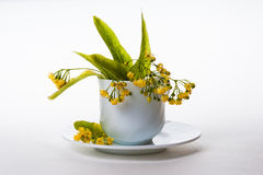 Linden tree flowers in a teacup. Linden flowers are used to cure colds, cough, fever, infections, inflammation, high blood pressure, headache (migraine), and stock images