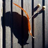 Linden tree seeds. Autumn linden tree seeds in the sun on wood deck stock image