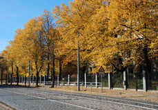 Linden trees in autumn. Autumn leaves of linden trees royalty free stock photography