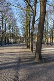 Linden trees in city centre of The Hague, the Netherlands Royalty Free Stock Photography