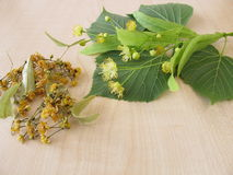 Linden twigs with flowers and dried linden flowers Stock Photo