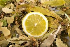 Linden und Zitrone Stockbild