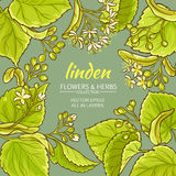 Linden vector frame. Linden branches vector frame on color bckground Royalty Free Stock Photography