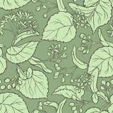 Linden vector pattern. Linden vector seamless pattern on color background Stock Image