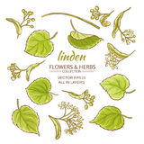 Linden vector set. Linden flowers and leaves vector set on white background Stock Photography