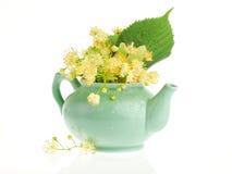 Lindenbaumblumen Lizenzfreies Stockbild
