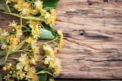 Lindenblätter und Blumen Stockbilder
