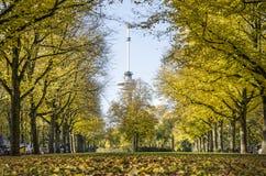 Lindeweg in de herfst stock foto