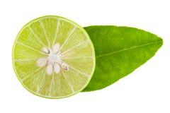 Lindgrüne Zitrone Lizenzfreie Stockbilder