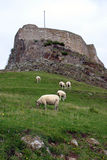 Lindisfarne Castle. Castle on the Holy Isle of Lindisfarne in Northumberland, England Royalty Free Stock Images