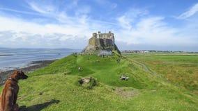 Lindisfarne slottpanoramautsikt med en hund, helig ö, Northumberland fotografering för bildbyråer