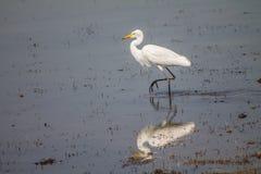 Lindo al aire libre de los pájaros Imagen de archivo libre de regalías