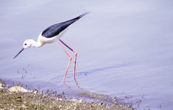 Lindo al aire libre de los pájaros Imagenes de archivo