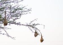 Lindo al aire libre de los pájaros Fotografía de archivo
