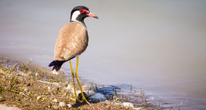 Lindo al aire libre de los pájaros Fotos de archivo libres de regalías