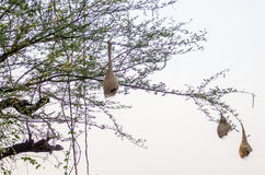 Lindo al aire libre de los pájaros Fotografía de archivo libre de regalías