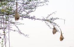 Lindo al aire libre de los pájaros Imagen de archivo