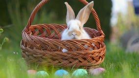 Lindo poco conejo saca de una cesta al lado de los huevos de Pascua pintados