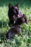 Lindo pocos gatos en la hierba imagen de archivo libre de regalías