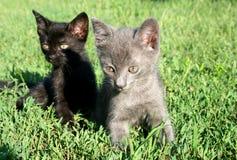 Lindo pocos gatos en la hierba foto de archivo libre de regalías