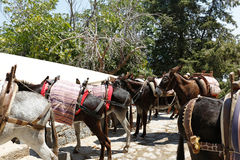 Lindos Taxi, Rhodes, Greece. Donkey's used as transport to the Acropolis in Lindos, Rhodes, Greece stock photo