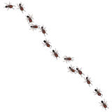 Line of Ants. A metaphorical illustrated background with a view of disciplined ants walking in a line Royalty Free Stock Photography