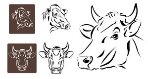 Line art of cow's head Royalty Free Stock Photo