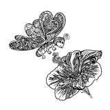 Line art of flying butterfly with Chinese rose flower. Lline art of flying butterfly with Chinese roseor Hibiscus flower for coloring Royalty Free Stock Photography