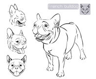Line art_French bulldog Royalty Free Stock Images