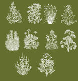 Line art: Herbs and Spices Royalty Free Stock Photography