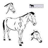 Line art of horse Stock Images