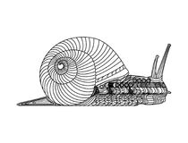Snail with abstract decoration. A line art illustration of a slug, or snail with his shell, and with abstract designs and decoration Royalty Free Stock Photography
