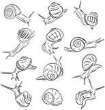 Line Art Illustration Snail Vectors Stock Images