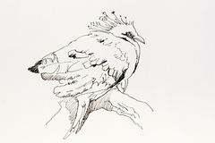Line art ink drawing of tropical bird Goura victoria sitting on. Line art ink drawing sketch of tropical bird Goura victoria sitting on the tree Royalty Free Stock Photo