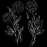 Line art peony hand drawn outline for print design. Vector isolated outline drawing. Flower pattern. Sketch set. Tattoo sketch. Vector peony floral botanical vector illustration